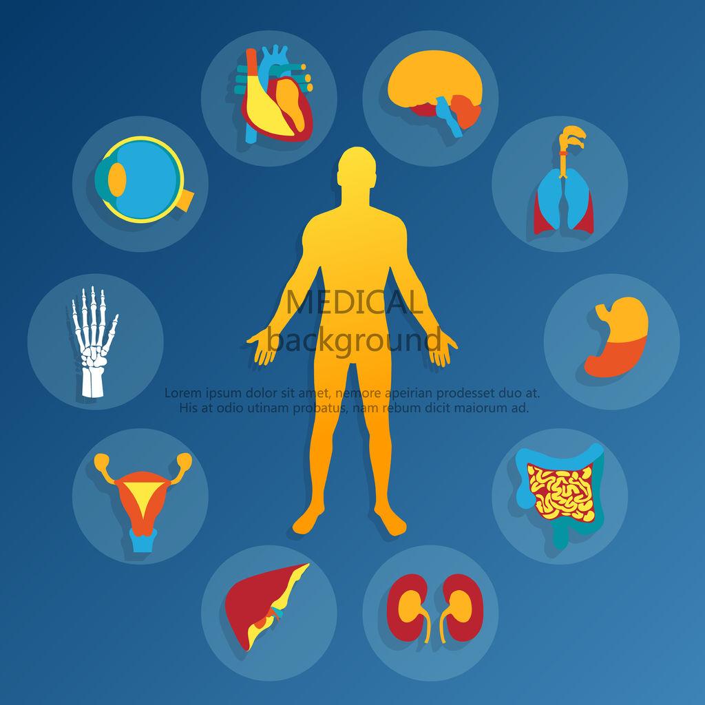 Medical Background Human Anatomy Image